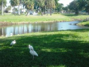 Gaines Park 031
