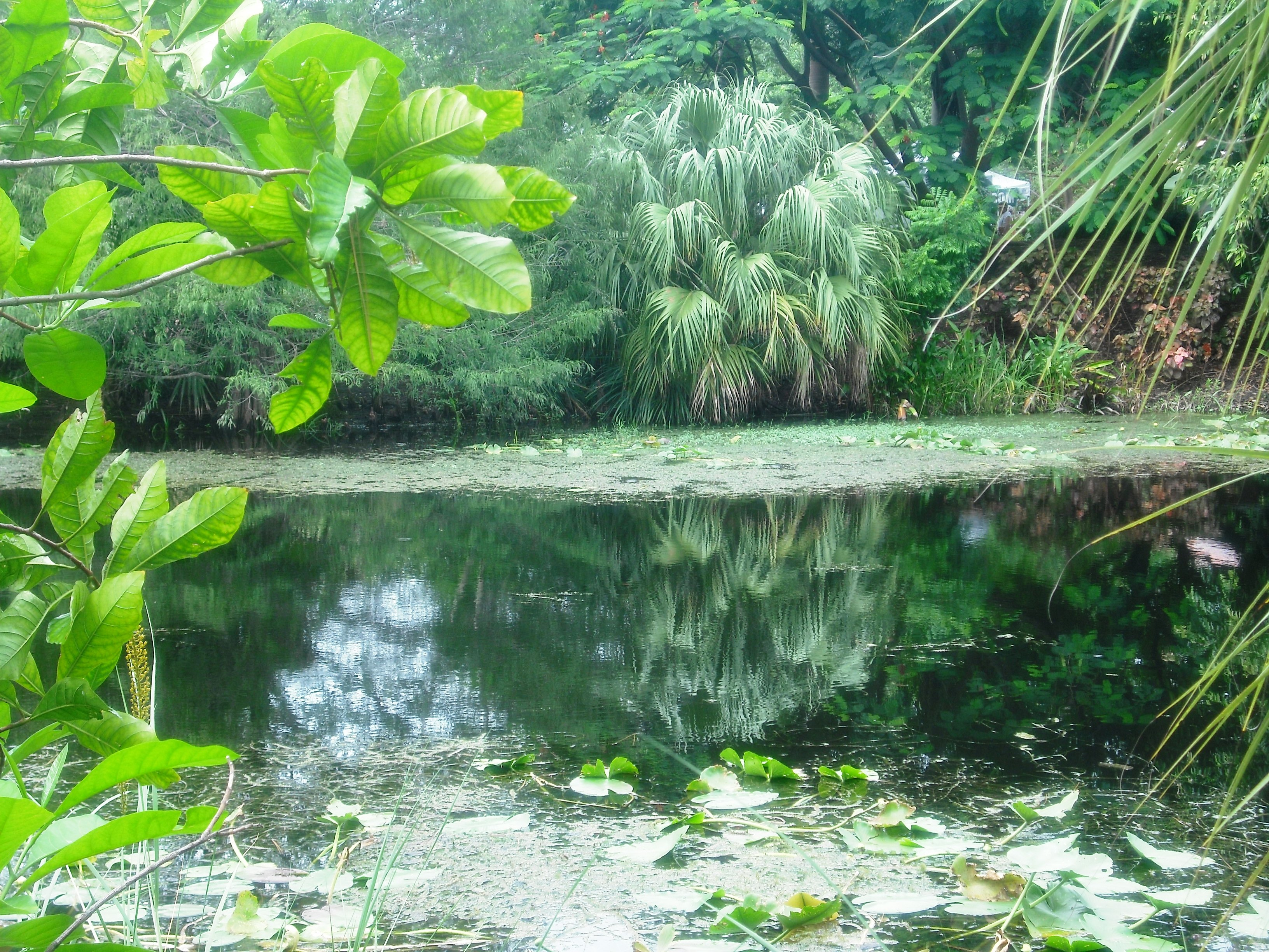 My visit to Mounts Botanical Garden | West Palm Beach Parks