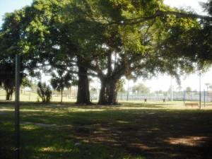 Phipps Parks 2-20-13 025
