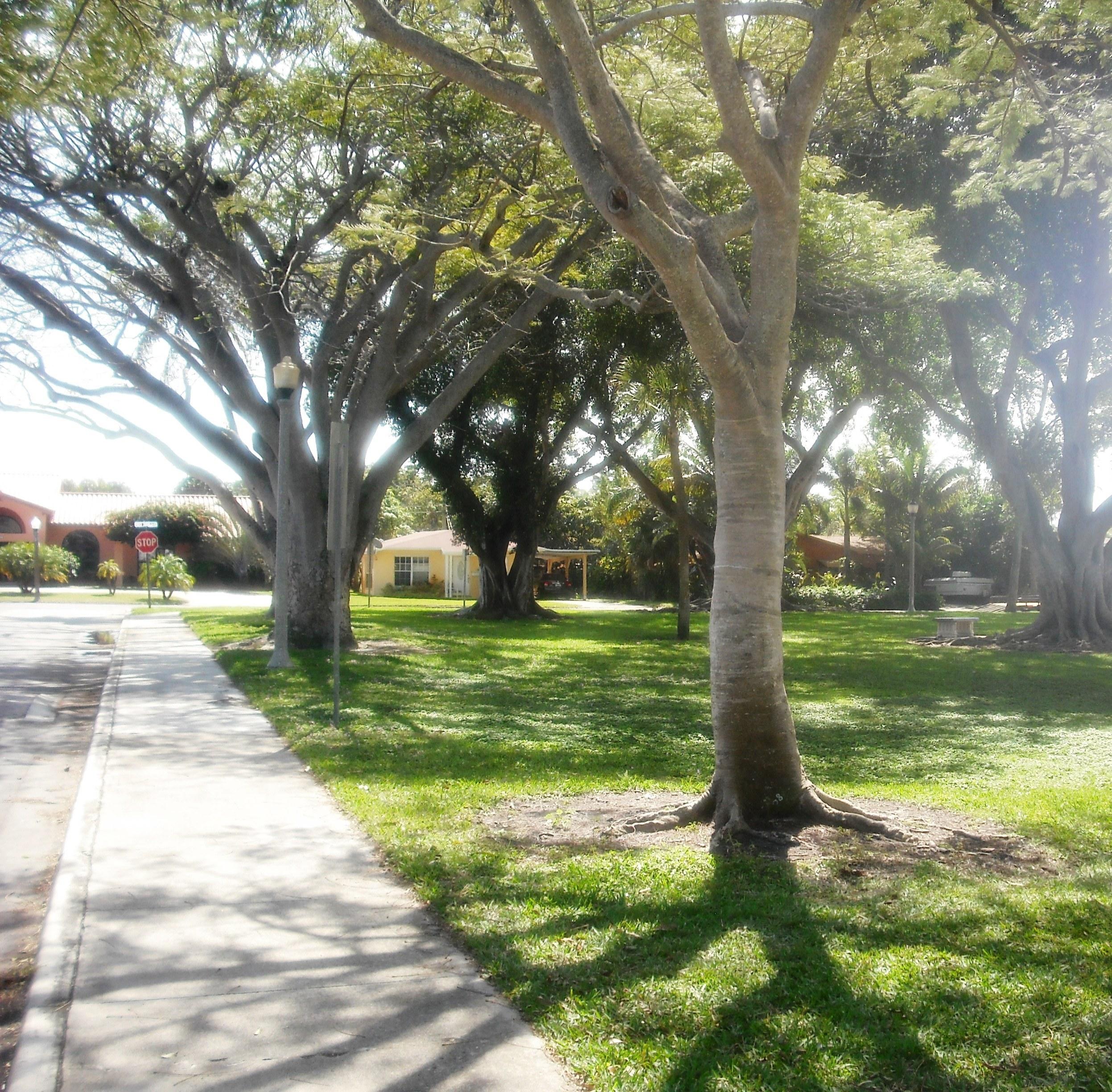 Vedado Park 2-20-2013 035