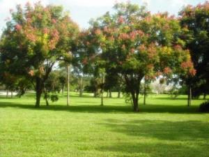 Dreher Park North 029