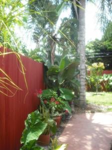 shade trees 001