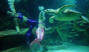 Weeke Wachee mermaid