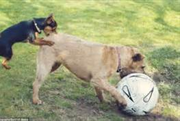 dogs with ball