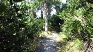 apoxee-trail-dry-path