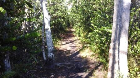 apoxee-trail-nature-path