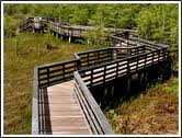 boardwalk grassy waters
