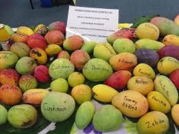 mangoe variety