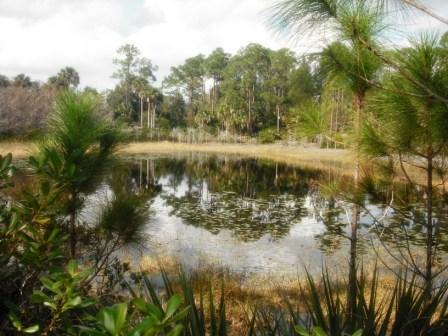 Okeeheelee Nature Center 05