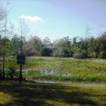 Okeeheelee Nature Trail 021