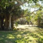 Okeeheelee Nature Trail