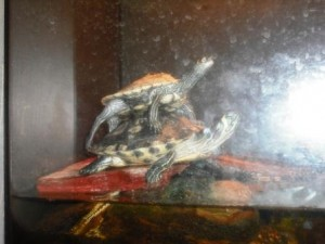 Stacked Turtles Okeeheelee