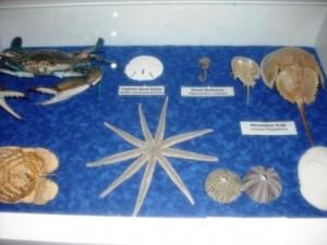 Manatee Lagoon Center Indoor Displays