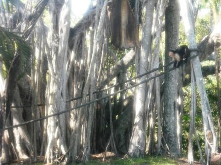 Monkeys Palm Beach Zoo