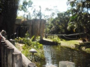 Palm Beach Zoo Monkey Island