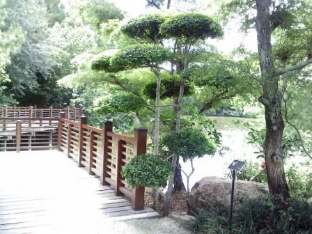 Morikami Tree Design