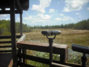 Grassy Waters viewing scope