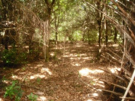 Frenchman's Forest Natural Area PBG flat woods – West Palm