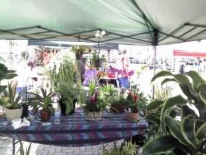 Riviera Beach Marina Greenmarket Plants Orchids