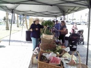 Riviera Beach Marina Greenmarket Produce