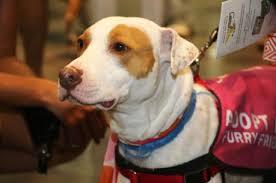 Countdown 2 Zero event wpb dog adoption