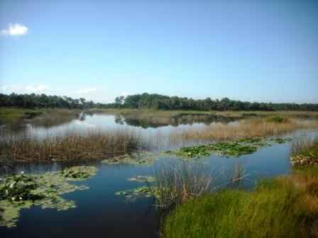 winding-waters-natural-area-wpb-observation-platform-views