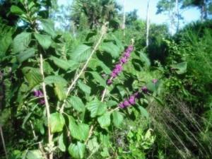 winding-waters-wpb-berries
