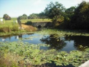 winding-waters-wpb-first-bridge-views