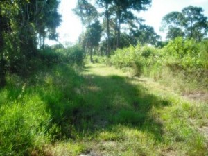 winding-waters-wpb-hiking-grassy-trail