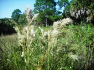 winding-waters-wpb-plants