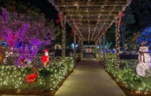 hoffmans-christmas-lights