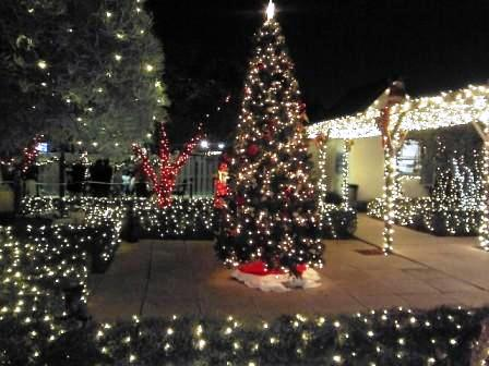 2017 Christmas Tree Lighting Events in West Palm Beach area & 2017 Christmas Tree Lighting Events in West Palm Beach area | West ...