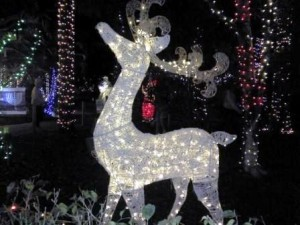 hoffmans-winter-wonderland-reindeer