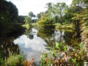mounts-botanical-garden-scenery-wpb