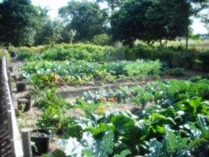 mounts-botanical-vegetable-garden-dec-2016