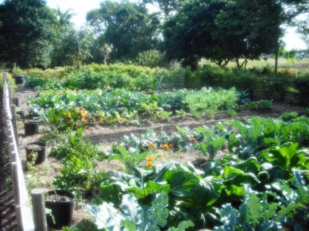 mounts-botanical-vegetable-garden-dec-2016
