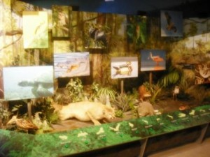 PB Science Museum Everglades Exhibit