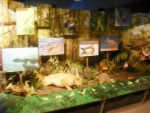 PB Science Museum Everglades Exhibit