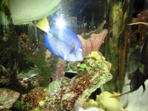 South Florida Science Center and Aquarium Fish