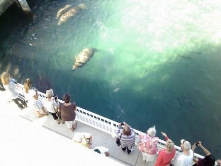 WPB Manatee Lagoon deck