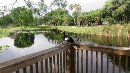 Duck resting Dreher Park