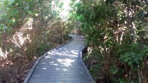 Boardwalk JN Darling Wildlife Refuge