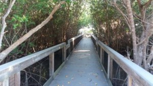 Ding Darling Wildlife Refuger Boardwalk
