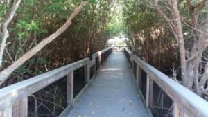 Boardwalk Ding Wildlife Refuge