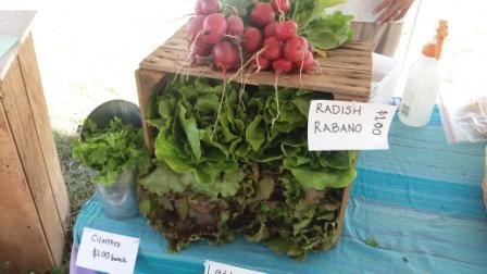 20171216_11Westgate Greenmarket Radish