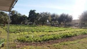 The Gate Urban Farm Westgate WPB