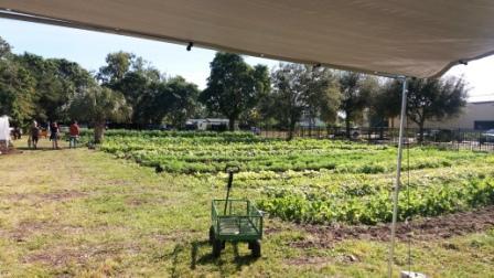The Gate Urban Farm field