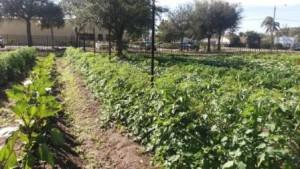 Urban Farm Westgate Greenmarket WPB