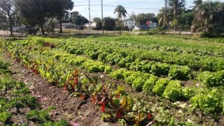 Urban Farm Westgate WPB