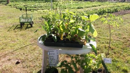 Westgate Greenmarket Herbs